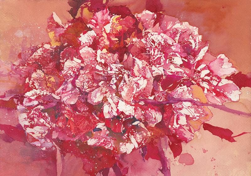 Rose - Daniele Gay