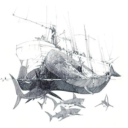 Moby-Dick_squartamento-Daniele-Gay