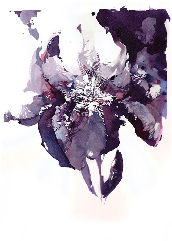 Iris flower watercolor 01